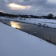River Wensum, Swanton Morley