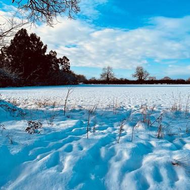 Snowy Fields in Swanton Morley