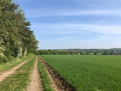 View from Primrose Hill, Swanton Morley