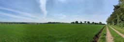Primrose Hill, Swanton Morley