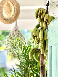 Bahamian bananas