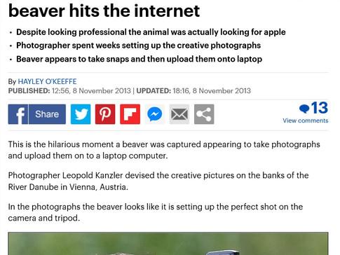 Beaver mailonline.jpg
