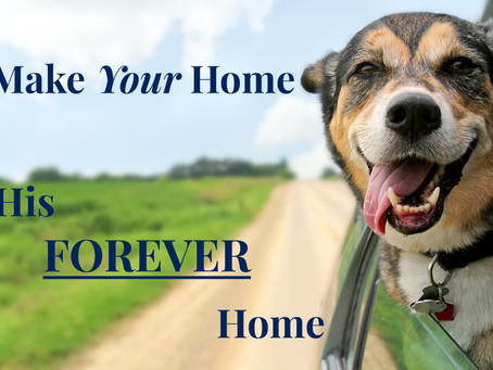 Make Your Home His Forever Home