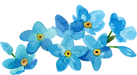 forgetmenot_aquareldesigns5.png