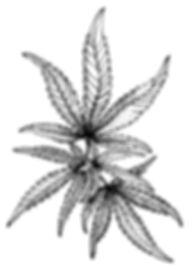 iStock-1033869138 leaf.jpg