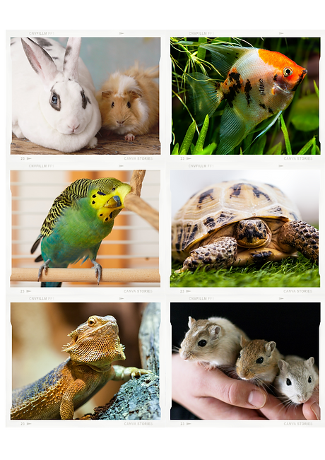 small pet photo (1).png