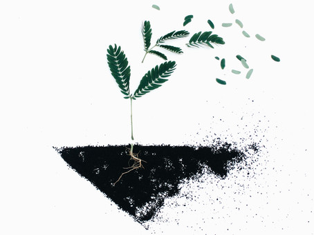 The State of Sustainability