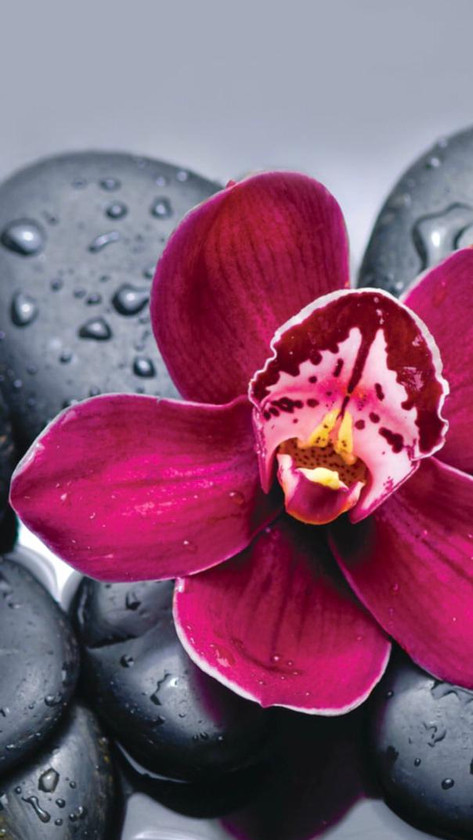 Red Orchid on Basalt