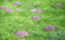 moles pest control coventry