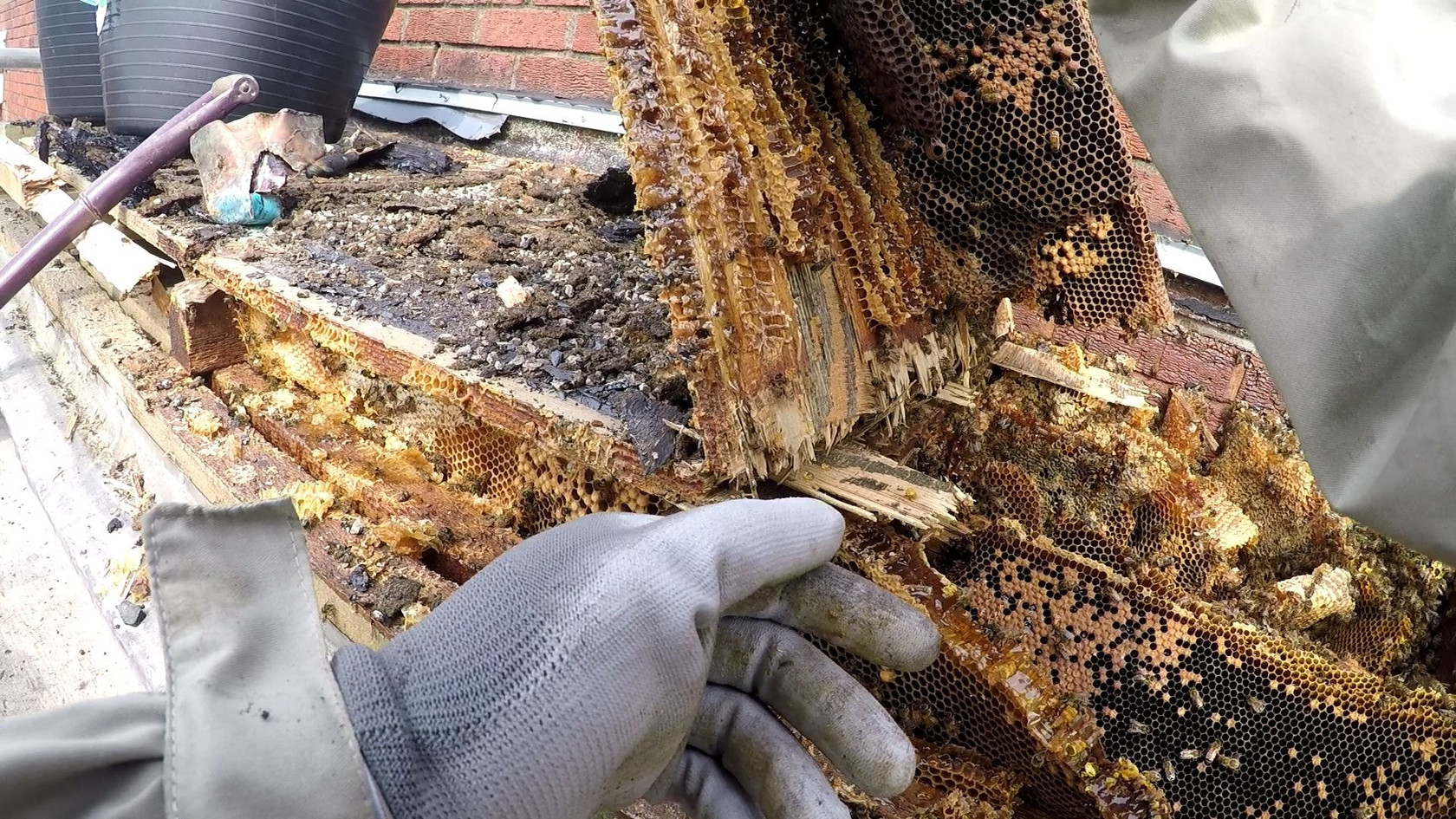 honey bee relocation coventry