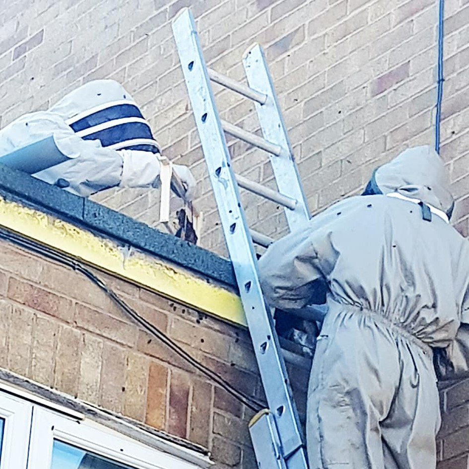 bee removal from roof coventry
