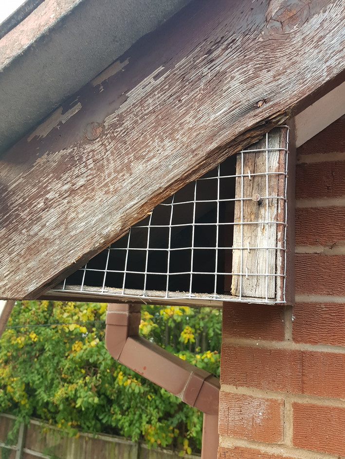 Squirrel Proofing Coventry
