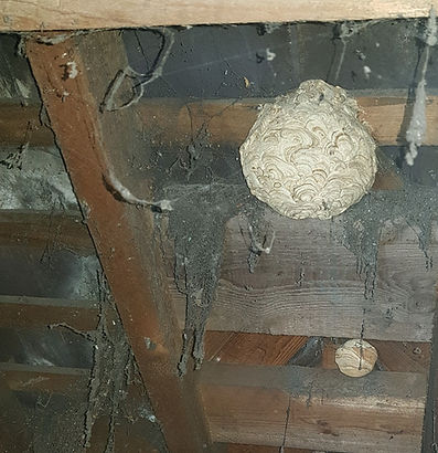 wasp nest removal in loft coventry