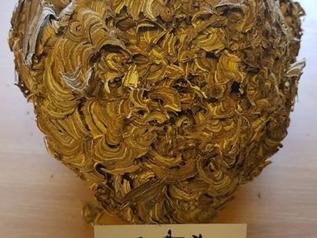 Identifying a Wasps Nest