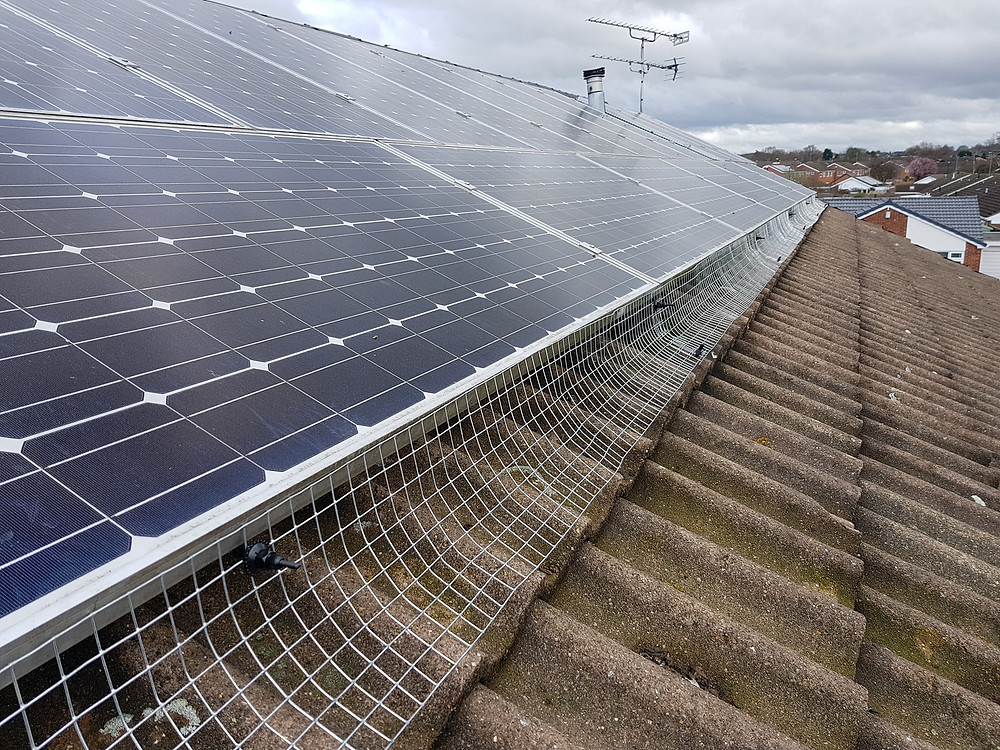 Solar panel pigeon proofing coventry
