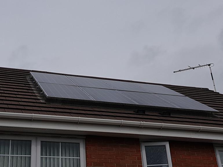 solar panels nesting birds coventry