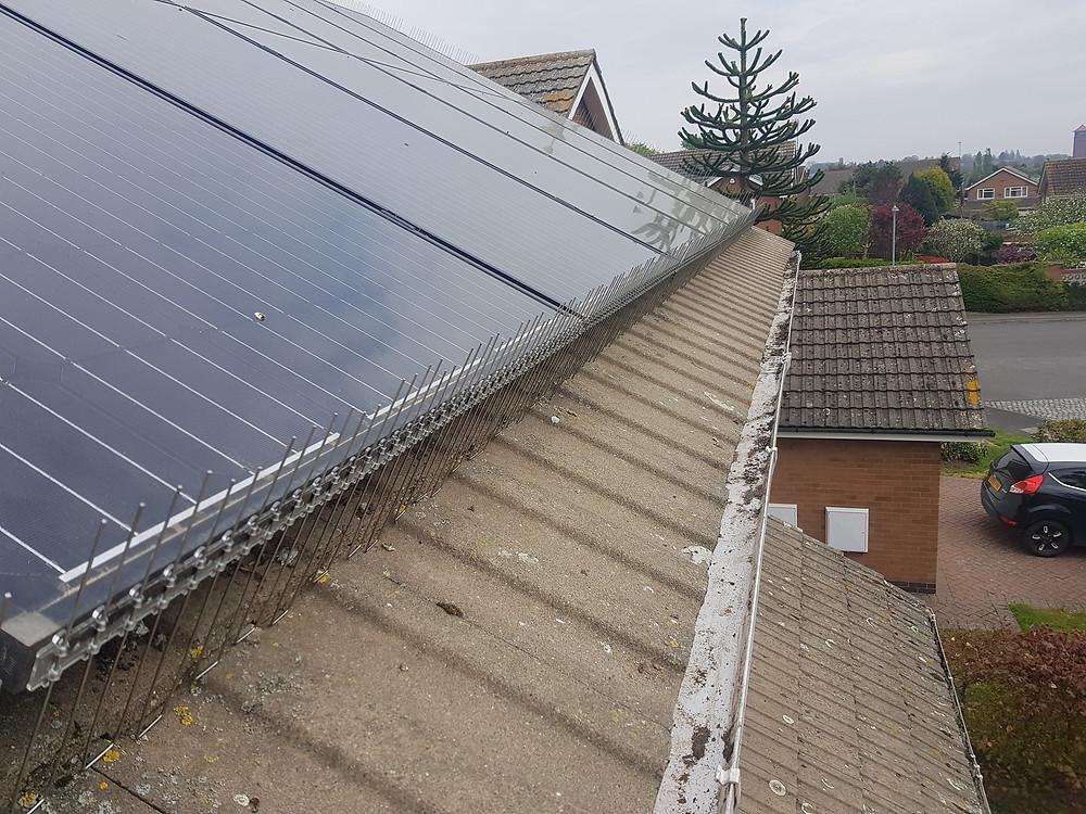 pigeon under solar panels