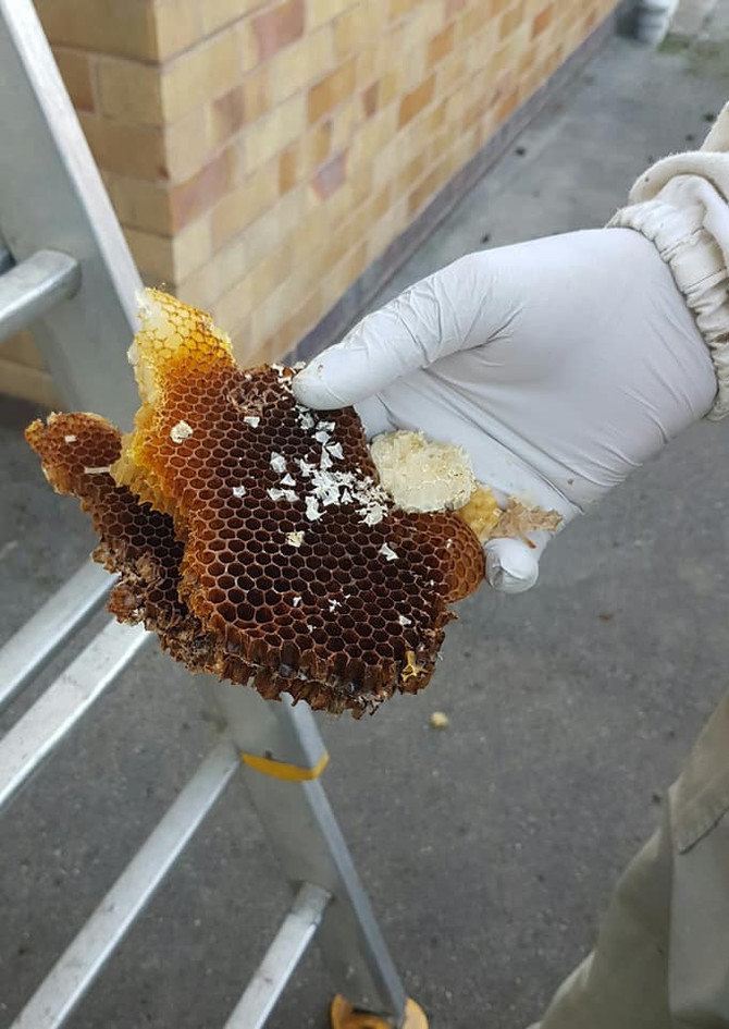 bee hive removal coventry