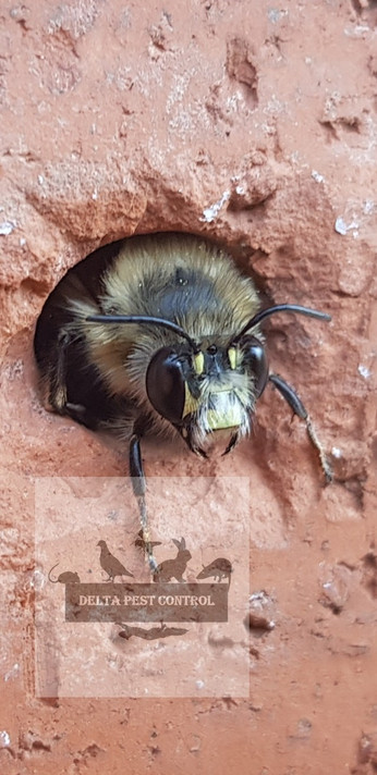 bees pest control in coventry