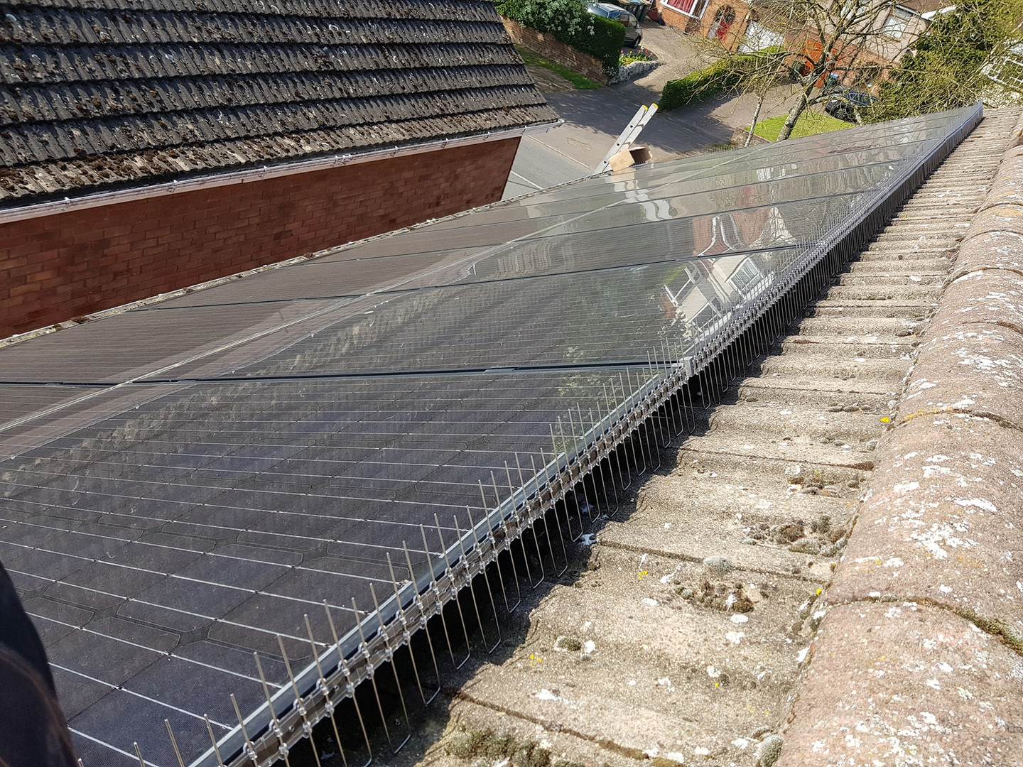 solar guard bird proofing