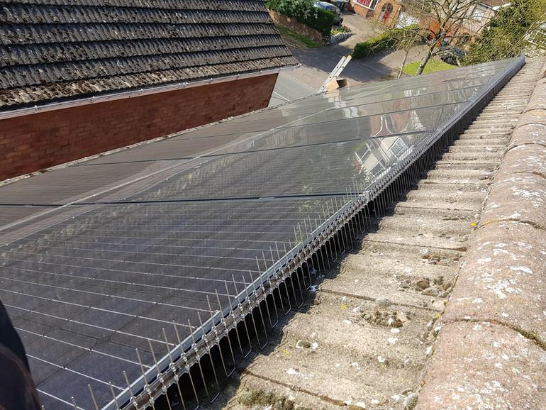 solar guard bird proofing