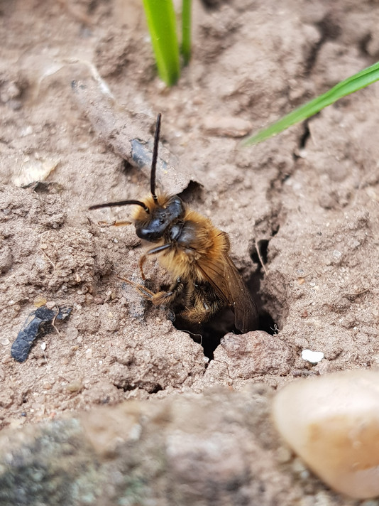 bees pest control coventry
