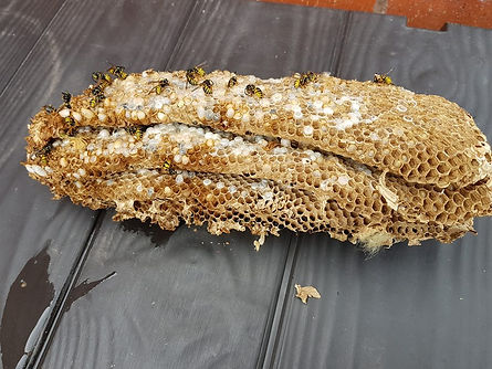 wasp nest removal in house