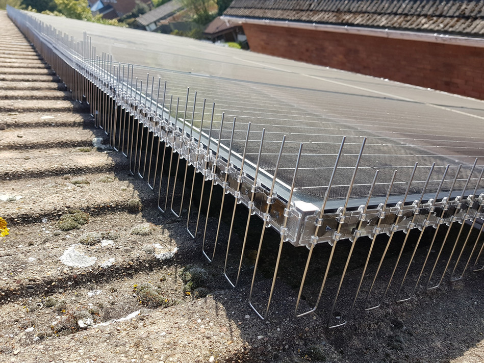 pro bird solar guard pigeon proofing