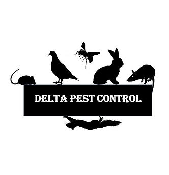 Pest Control in Coventry