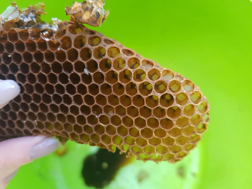 bee hive coventry
