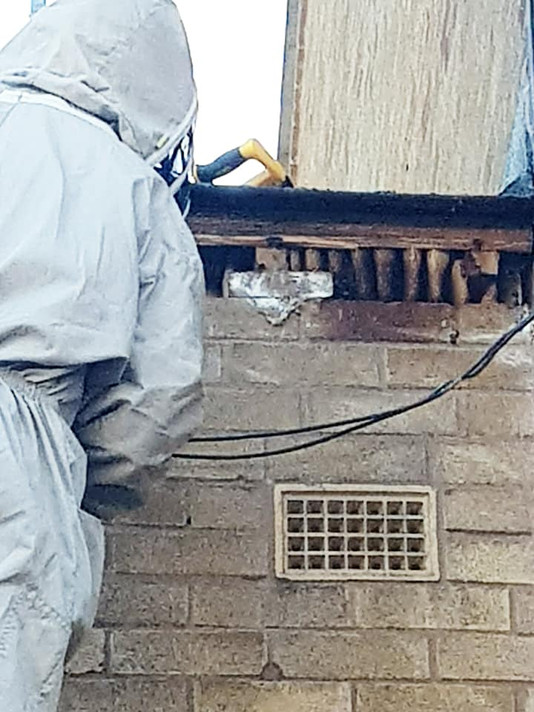 bee hive in roof removal coventry