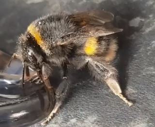 Bumble Bees! and what to do if you find them in your property