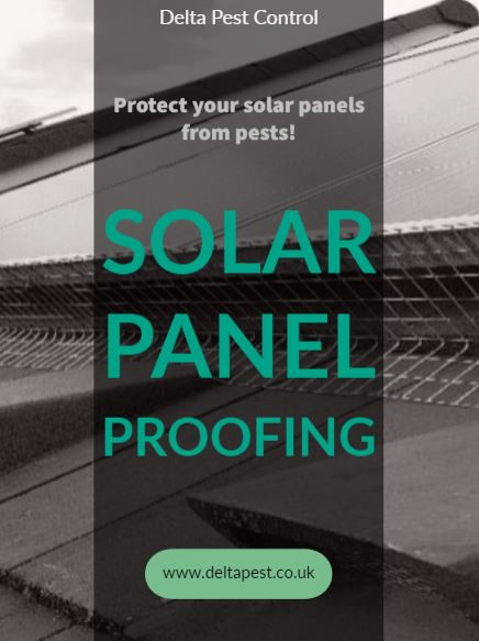 solar panel proofing bird proofing coventry