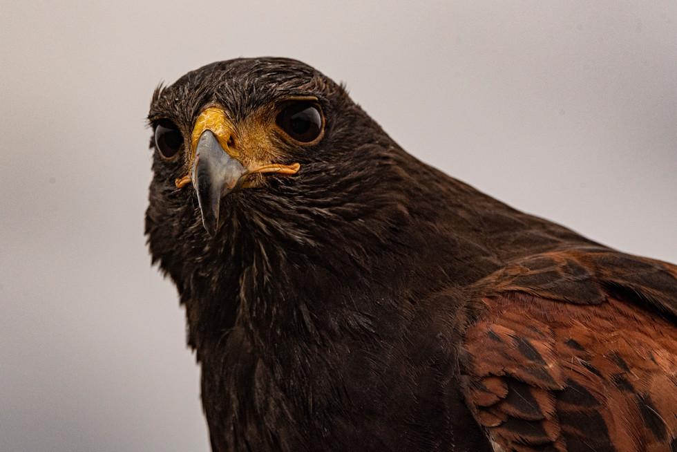 bird detterent coventry