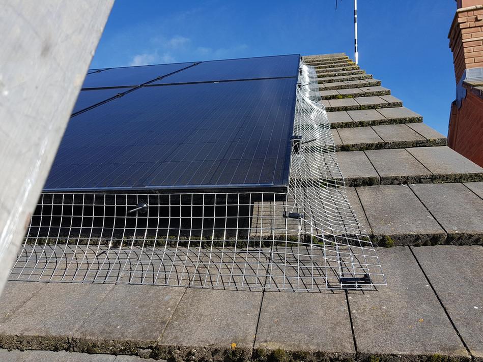 solar panel proofing nesting birds coventry