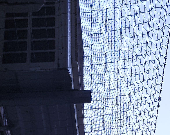 bird%2520netting_edited_edited.jpg