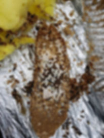 wasp nest removal in coventry