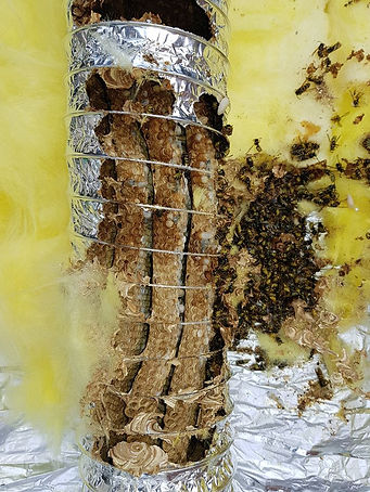 wasp nest removal from air duct