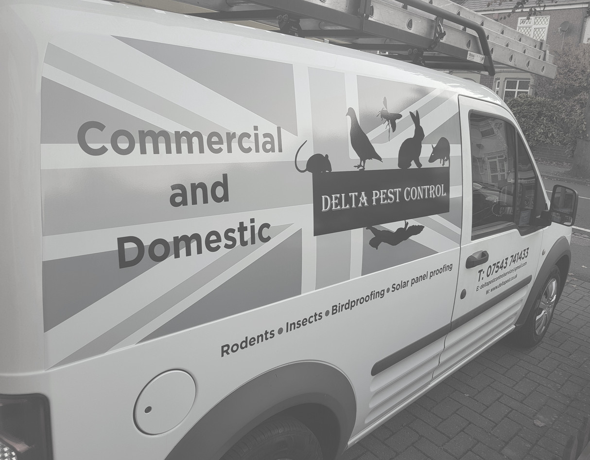 Delta Pest Control Coventry & Warwickshire