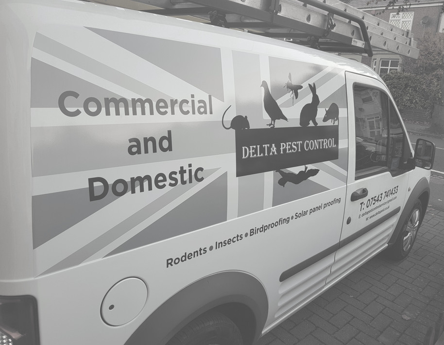 Delta Pest Control Coventry & Warwickshire