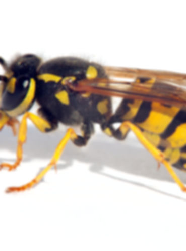 Insect Pest Control Coventry