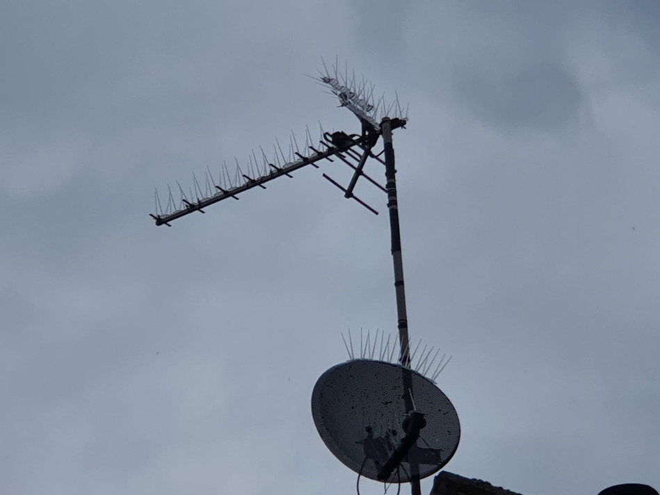 bird spikes on aerial coventry