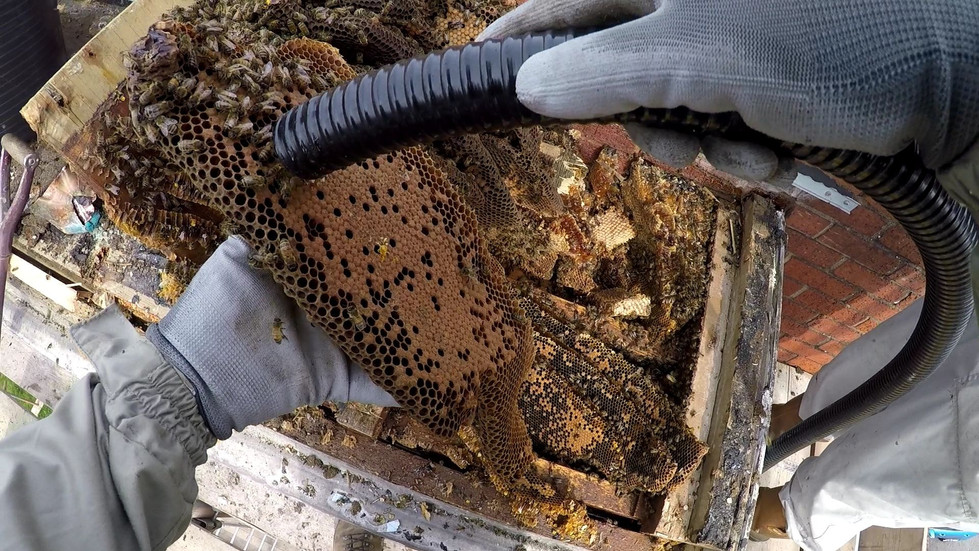 delta pest control honey bee relocation