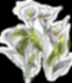 CALLE_SYLWIA_APO0557 elab2.png