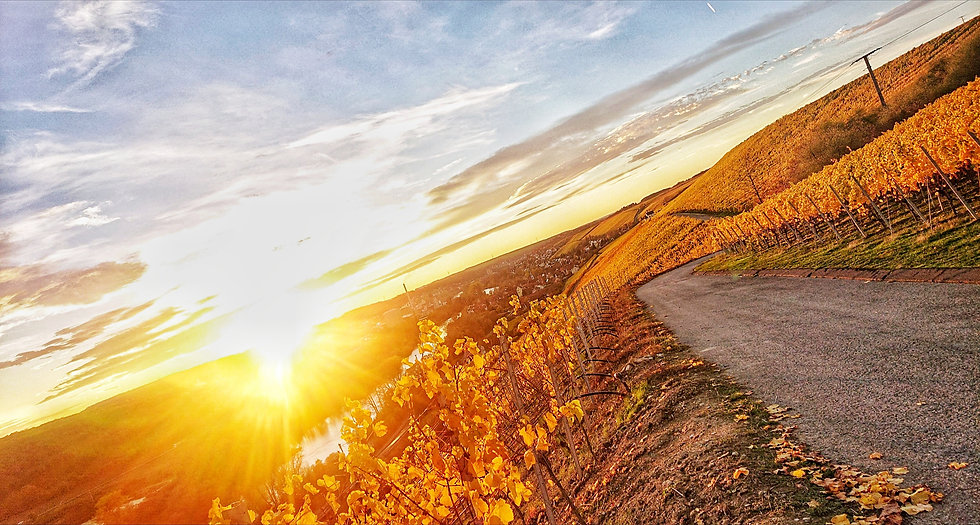 Panoramic sunset with a view of the vineyards and Ochsenfurt