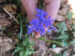 petites-fleurs-violettes.jpg