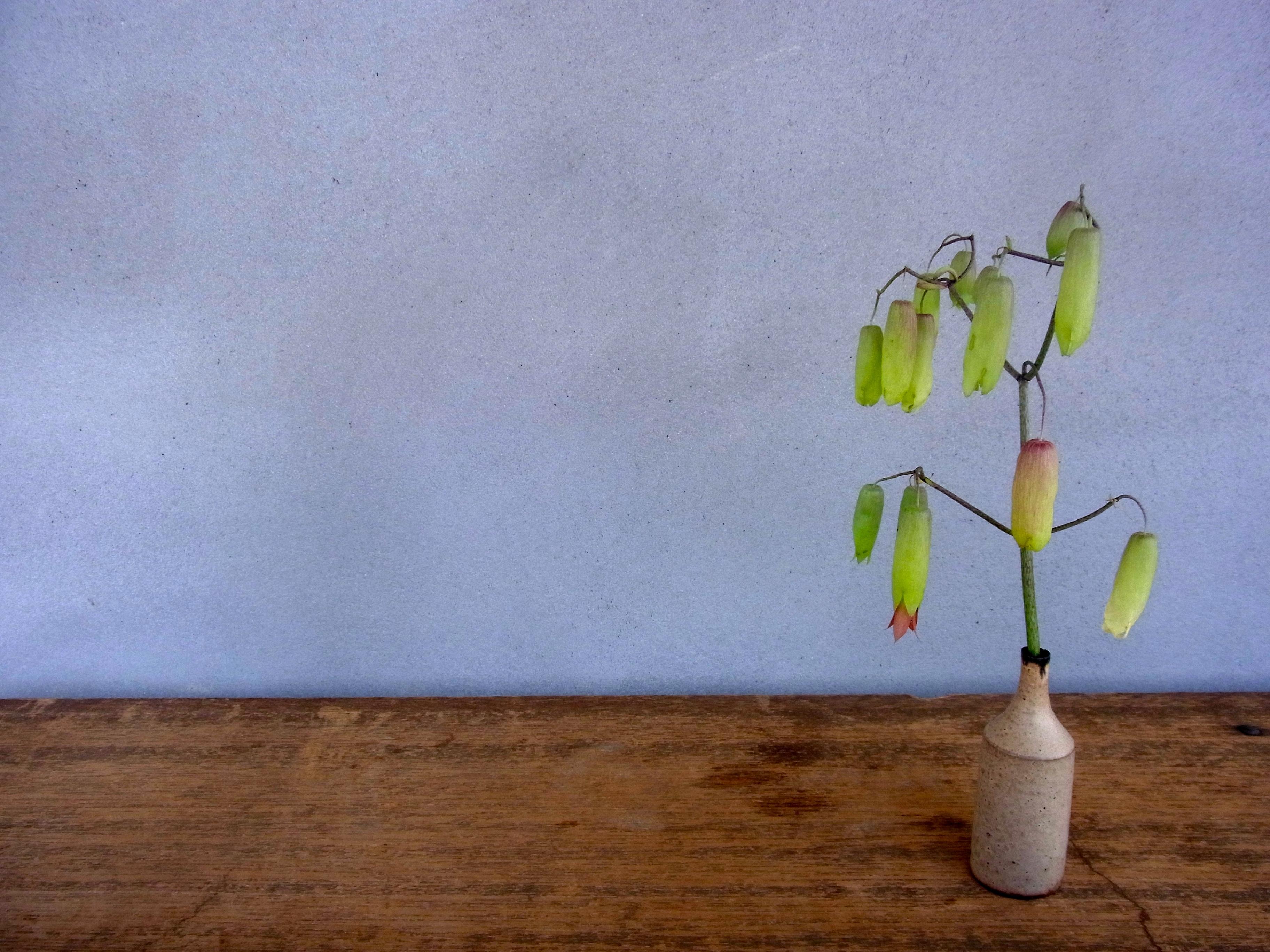 2014.4.22 花の名