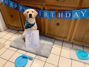 Let's Pawty: A Good Dog! Birthday Celebration!