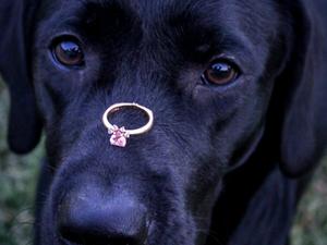 Puppy Love: Brittney & Brad