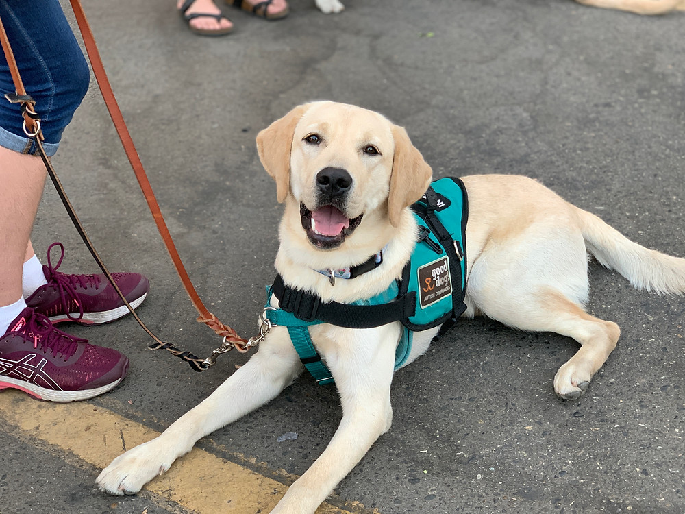 Bubba in service dog vest